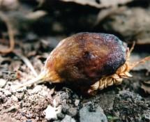 besourocisco (2)
